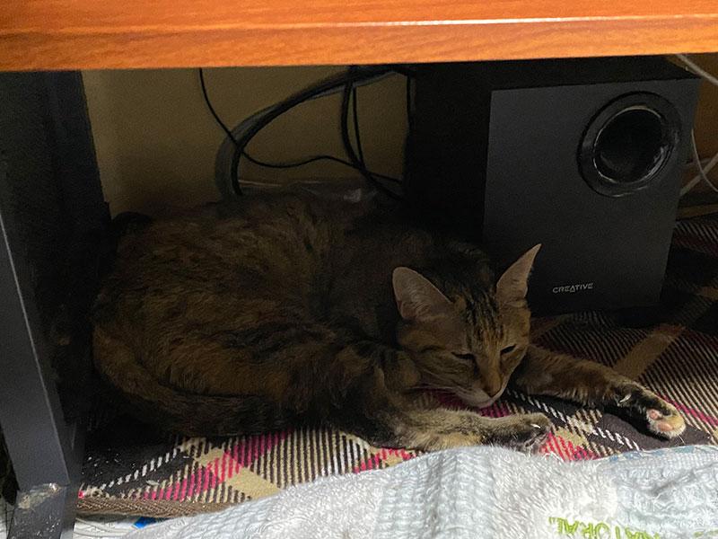 ホットカーペットの上で伸びる猫。